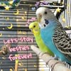 wewhlsminglovebirds3