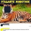 spiky_y_veseliy_2