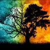 Im_a_fucken_tree_2014