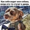 scant_groupsdog_boi