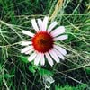 LittleBitOfEverything27_2014