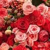 RedBlossom