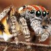 cuddly_spider_2014