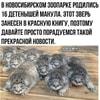 volatile_dobro_mem