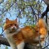 petite_groupscats