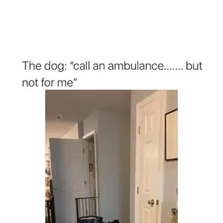 The Dog Call An Ambulance But Not For Me Ifunny For a job as a tourist guide, but i wasn't successful. ifunny