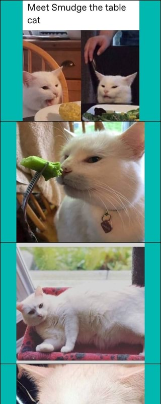 Meet Smudge The Table Cat Ifunny