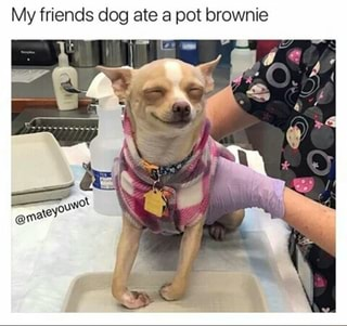 Dog Ate A Pot Brownie Ifunny