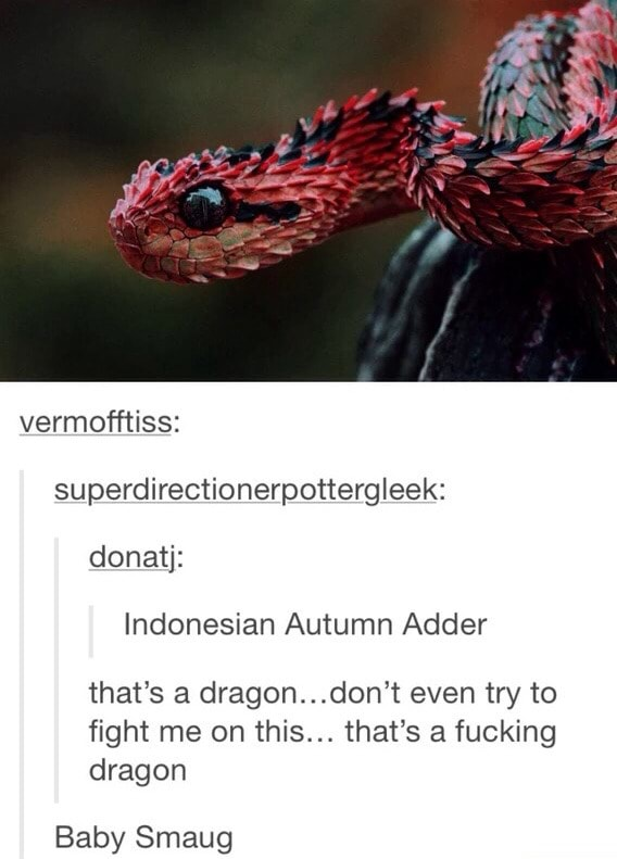 Vermof Ftiss Superdirectionerpottergleek Donatj Indonesian Autumn Adder That S A Dragonfldon T Even Try To Fight Me On This That S A Fucking Dragon Baby Smaug Ifunny