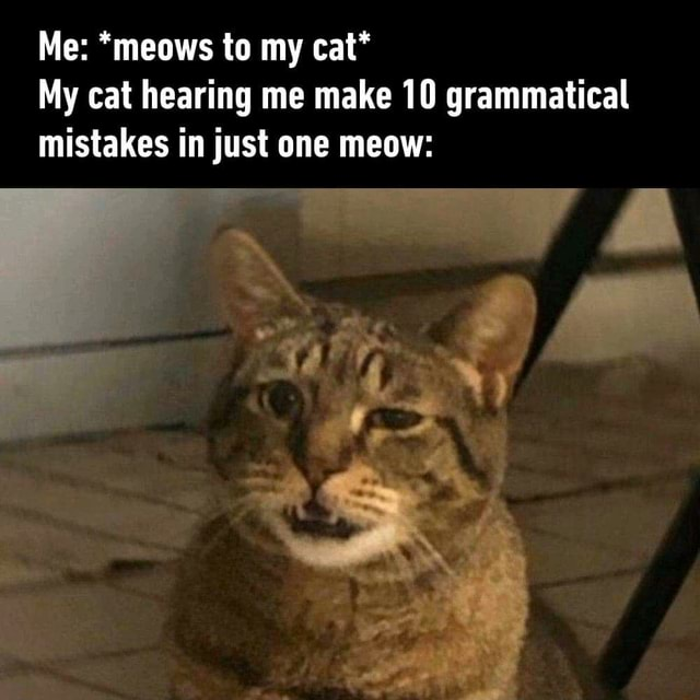 My cat hearing me make 10 grammatical mistakes in just one meow: - iFunny :)