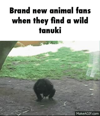 Tanuki Memes Best Collection Of Funny Tanuki Pictures On Ifunny